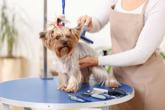 Dog Groomers in Dubai
