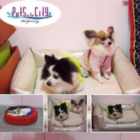 Mobile Pet Grooming In Dubai Pets In The City